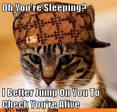 Scumbag Cat: I Saved You. Thank Me with Nomshttp://advice-animal.tumblr.com
