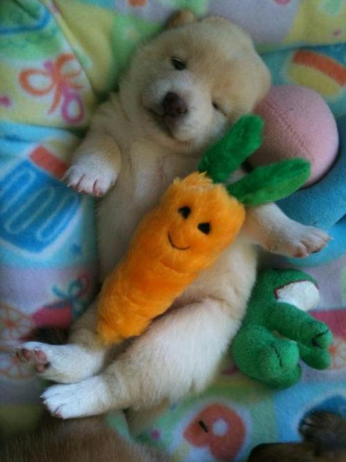straightbleach:  that carrot is at least 3x cuter than the puppy