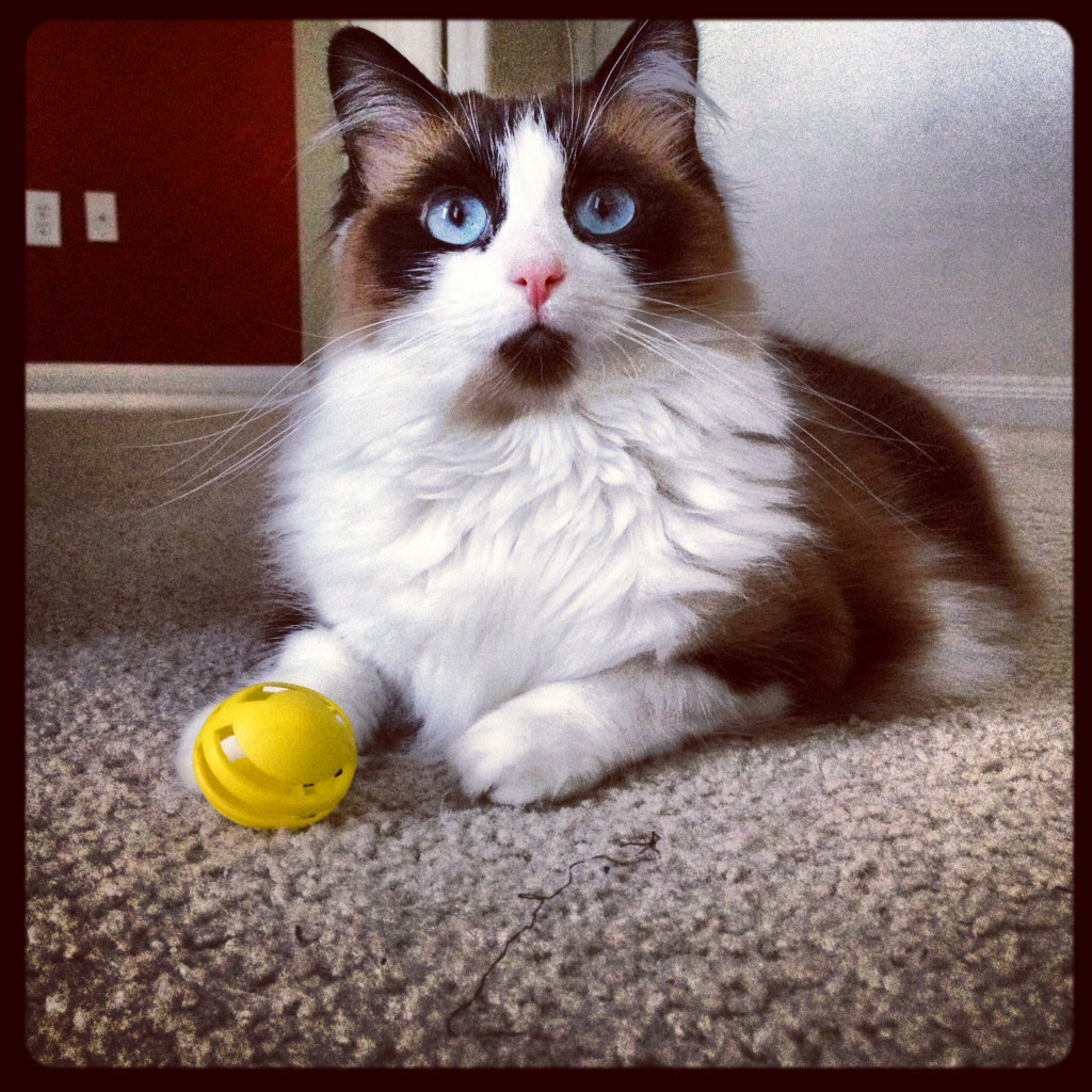 """A toy?! What the hell am I supposed to do with a stupid yellow plastic toy?!"" Photo via imgur"