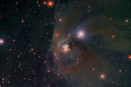 into-theuniverse:  variable star T Tauri (center) surrounded by Hind's Variable Nebula (NGC 1555/1554)