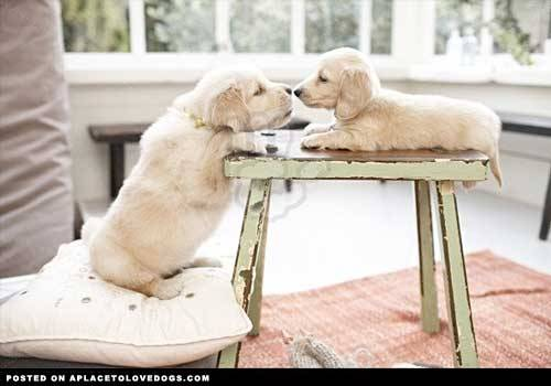 aplacetolovedogs:  pinterest The beginnings of a beautiful friendship Original Article