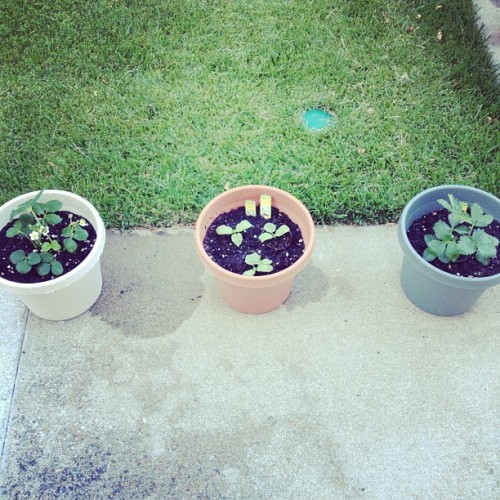 Grow (Taken with Instagram)
