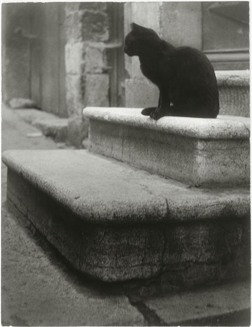 foxesinbreeches:  Le Chat noir by Brassaï, 1945