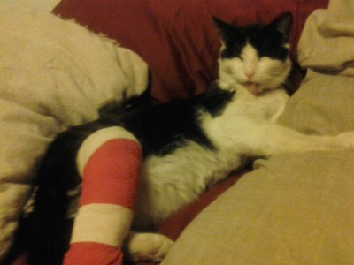 My poor kitty V got hit by a car and broke his little leg. We just got back from the vet and he's almost better now. We go into surgery tomorrow.
