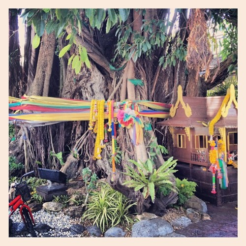 Banyan tree (Taken with Instagram at เกาะพีพี (Phi Phi Island))