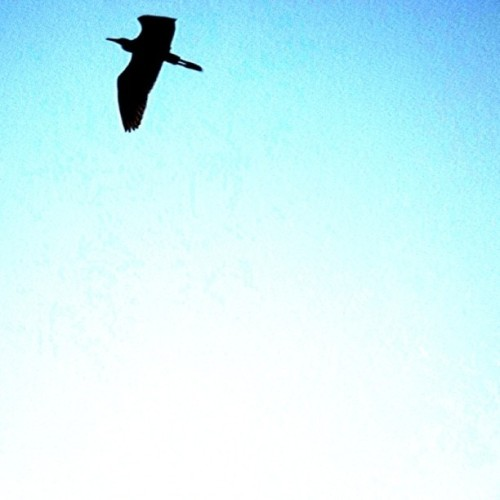 Good morning igers!! #bird #fly #sky #picoftheday #photooftheday #gcs #gmy #instagood #instamood #igers #instagramers #impulse_daily #igshots #all_shots #webstagram #statigram #gang_family #jj #jj_forum #India  (Taken with Instagram at Burn it dawn - LinkinPark)