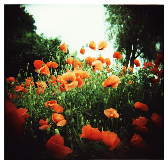 ashleelyn:  projectedendlessly: (via * by pearlgirl77 - Lomography)