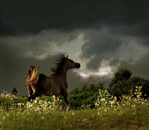 Horses and storms. Two of my favorite things.