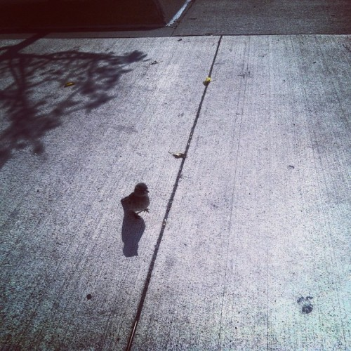 He just keep walking up on me lol (Taken with Instagram)