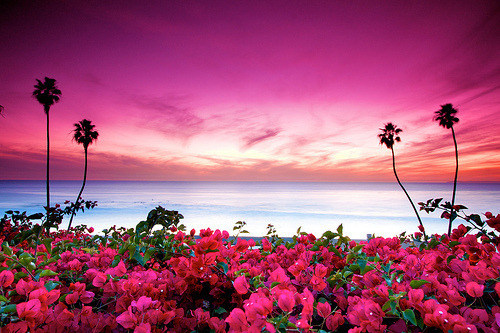 Flowers greeting the ocean