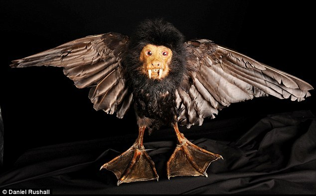 Duck/Monkey Hybrid - Nineteenth Century Taxidermy or further evidence that the Victorians were absolutely off their rockers!