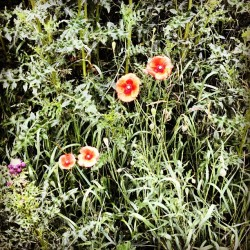 #flowers #flower #nature #grass #outside #love #life #webstagram #instagramhub #instagramers #iphonesia #instagram #instagood #iphone #picoftheday #popularpage #ig #igers #igdaily  (Taken with Instagram)
