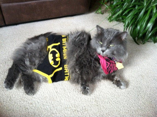 getoutoftherecat:  take those off cat. you are not batman. and you don't even need briefs.