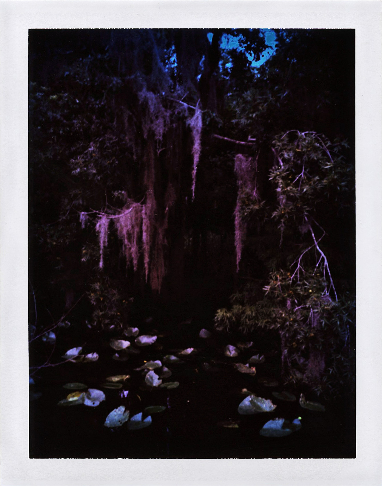 The Dead.  copyright adrienne c darnell (shot on the dead river in florida. mamiya+expired polaroid.)