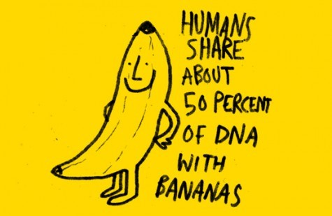 geneticist:  (via)