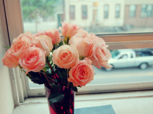 birthday roses by tweexcore on Flickr.  i don't usually like flowers. i think it's just something about this photo… maybe i wouldn't mind so much if i had a dingy city apartment with old creaky windows that look out to the street.
