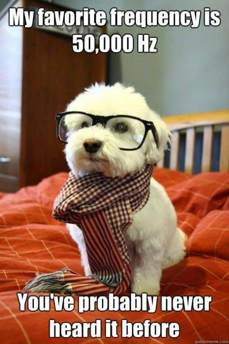 theinternetsuckstoday:  Hipster pup hears things you don't