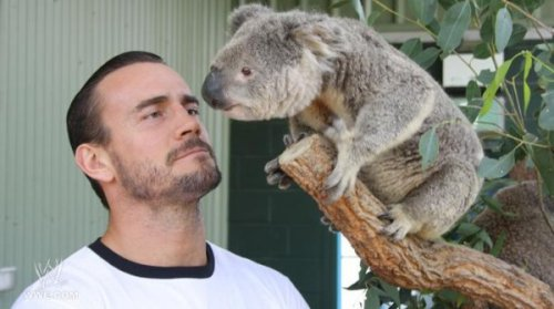 a-girl-named-stu:  CM Punk with a koala. Life is beautiful.