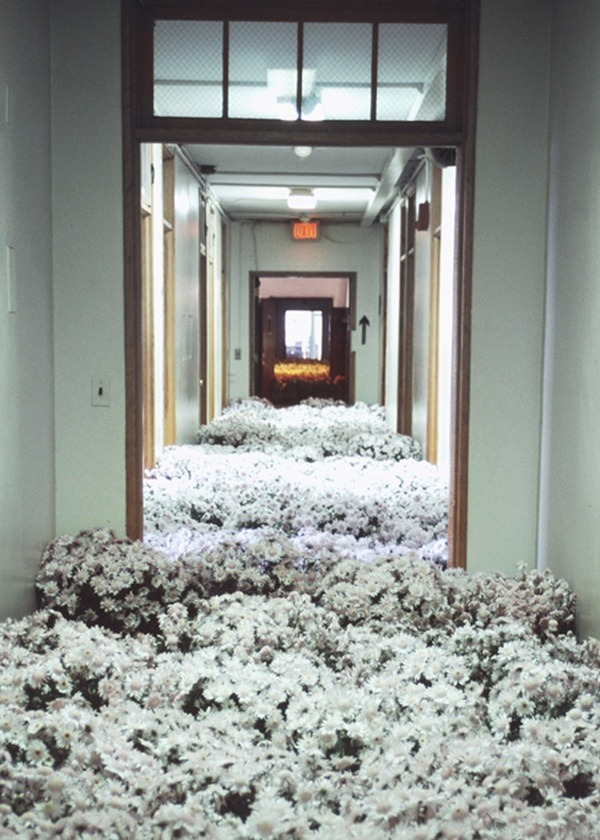 efedra:  Bloom, 2003 by Anna Schuleit An installation of 28,000 Potted Flowers at the Massachusetts Mental Health Centre to mark its closing. A sea of flowers and an explosion of colour and scent was accompanied by muted shuffling and muffled voices from a recording of the institutions last days. The work was made to commemorate the absence of flowers in a psychiatric hospital setting.