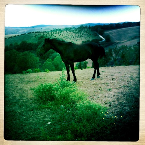 Horse at the local Agricultura. Montebello, Lazio. Italy. (iPhone photo).