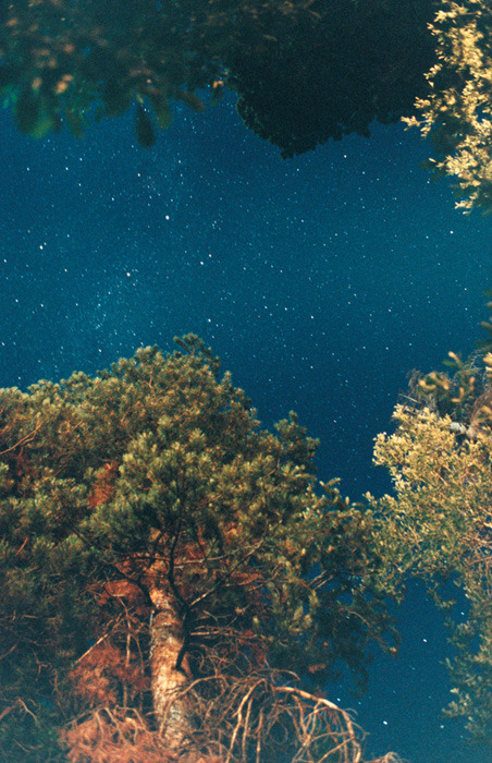 Ryan McGinley, Night Sky (Pine), 2010. Courtesy the artist and Alison Jacques Gallery, London