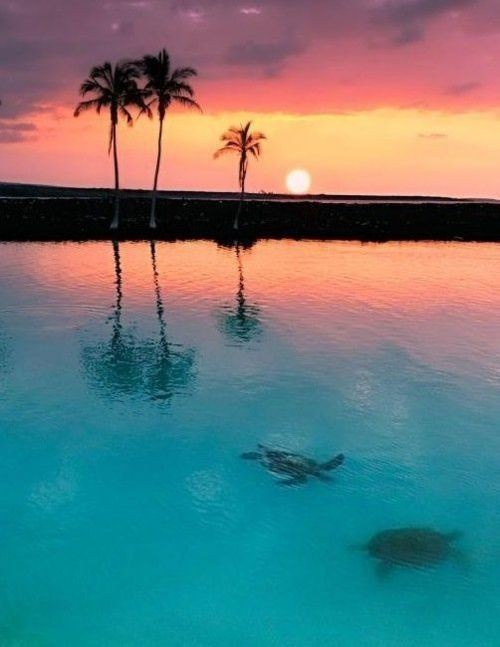 bluepueblo:  Sea Turtle Sunset, Tobago Cays, The Grenadines  photo via colleen