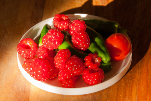 A little harvest of raspberries, padrone peppers and a principe borghese tomato.