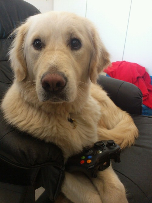 My dog is playing Cod. :)