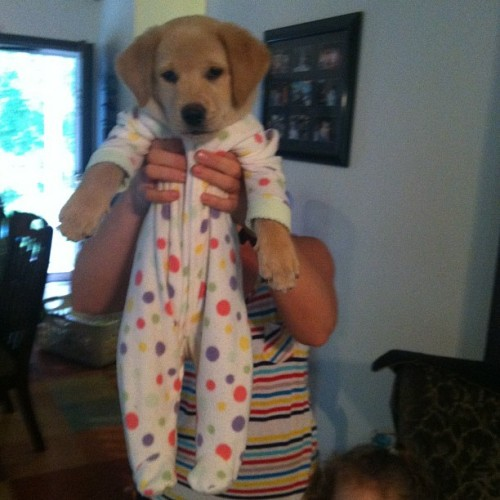 kneeyoncebowls:  puppy in pajamas