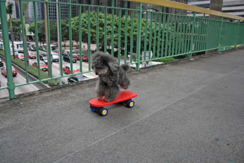 skate dog (by istolethetv)