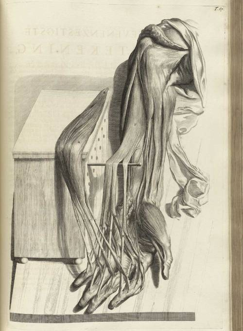 (via Historical Anatomies on the Web: Bidloo)