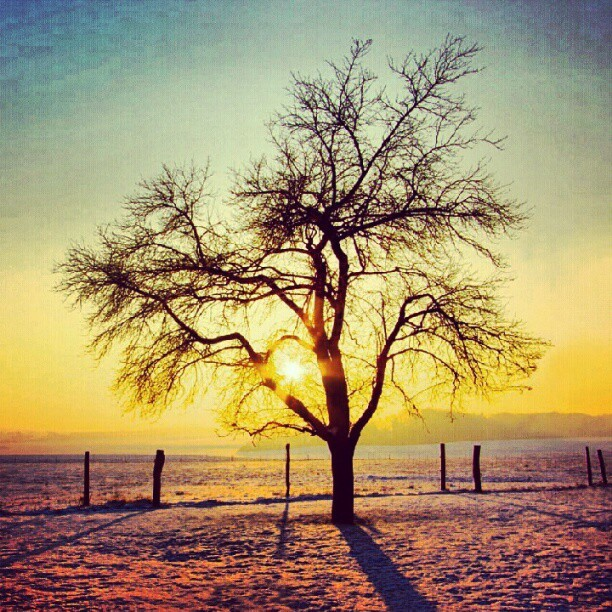 - Beautiful my goal is to draw this tree(;  iTs beyond beautiful huh . <3 (Taken with Instagram)