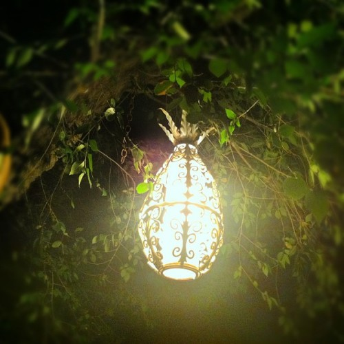 alien pineapple sighting. @chrisunck  (Taken with Instagram at Saddle Soap Ranch)