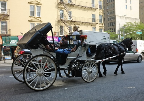 Wednesday, May 23, 2012 Riding barefoot in a horse-drawn carriage on 9th Avenue.  Hell's Kitchen, Manhattan, NY.