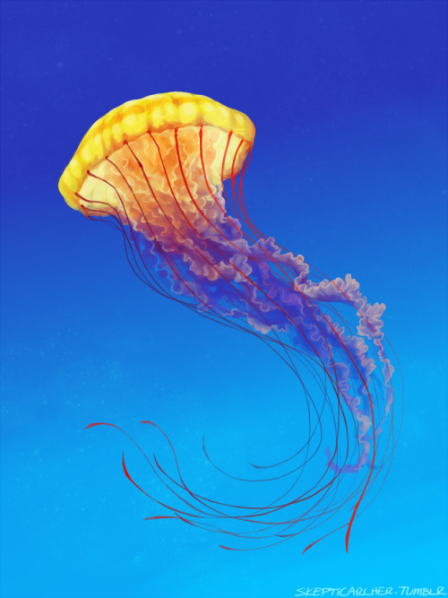 skepticarcher:  :V I wanted to paint a jellyfish…Turns out it was actually a really neat color study.