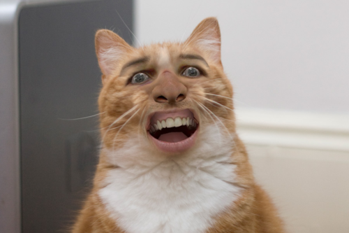IT'S NICOLAS CAGE'S FACE ON CATS!