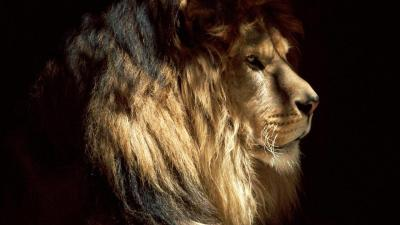 Lion, South Africa. Follow our blog. New travel photos posted daily.