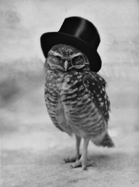 brilliant owl