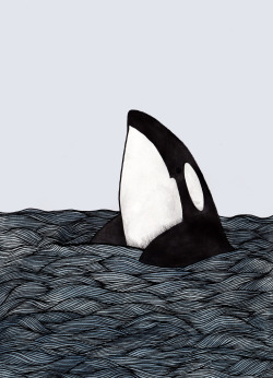 eatsleepdraw:  Killer whales are badass :) http://lottiedraws.tumblr.com