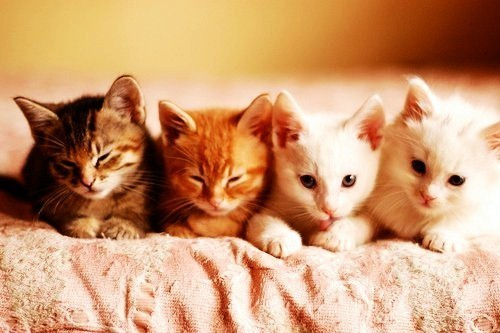fluffy-kittens:  DSC_0023 by lalalaurie
