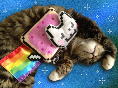 BREAKING : ★OFFICIAL★ Nyan Cat Toys from Jakk's Pacific Toys Coming Soon! [PHOTOS] -http://www.thetoyspy.com/2012/06/13/exclusive-official-nyan-cat-toys-coming-fall-2012-from-jakks-pacific/