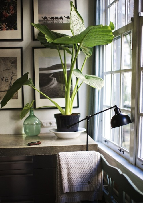 thatkindofwoman:  I need a plant in my part time apartment.
