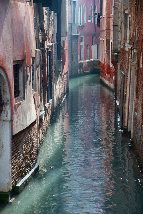 danceabletragedy:  Venice Backyard by H o g n e