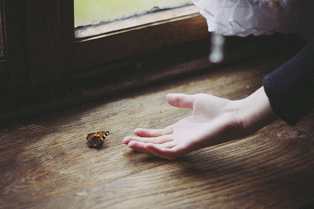 millionen:  (via hello little butterfly II | Flickr - Photo Sharing!)