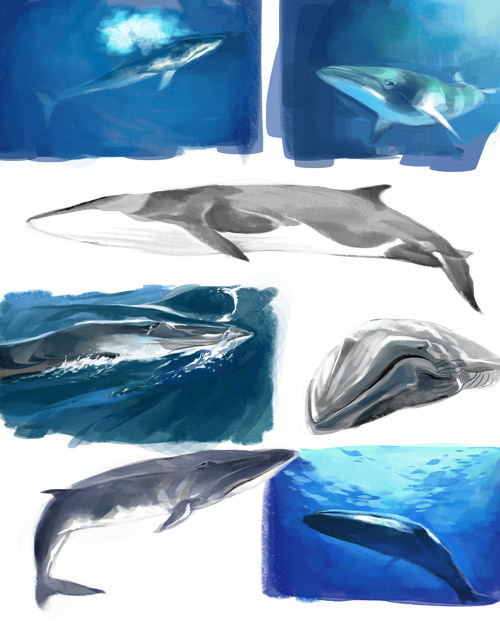 Fin whale studies from photos