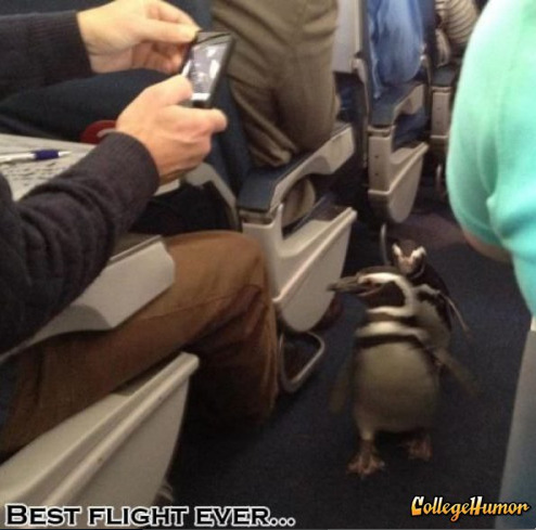 collegehumor:  Penguins on an Airplane They always dreamed of flying, and today that dream came true.  IM SICK OF THE MOTHERFCKING PENGUINS, ON THIS MOTHERFCKING PLANE!