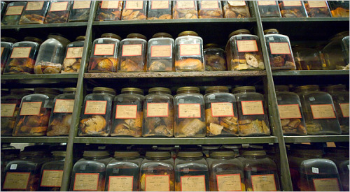 laphamsquarterly:  2012: 54 brains being stored at a Harvard-affiliated research laboratory rendered useless after their storage freezer malfunctions. 1907: Phrenology aficionado Walt Whitman's brain the subject of dispute and intrigue—was it stolen? Was it studied? Was it, as conventional science of the time believed it should be, larger than the brains of less accomplished men?  This is my favorite Deja Vu so far.