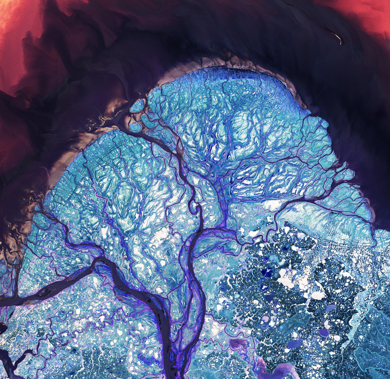 infinity-imagined:  The Yukon River Delta Arteries of a Kidney A Cerebellum An Electrical Discharge