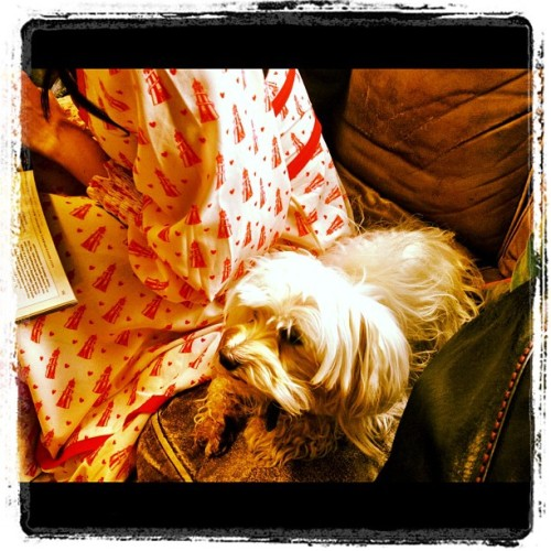 How a-dorable is @daisylowe's pup Monty? (Taken with Instagram)