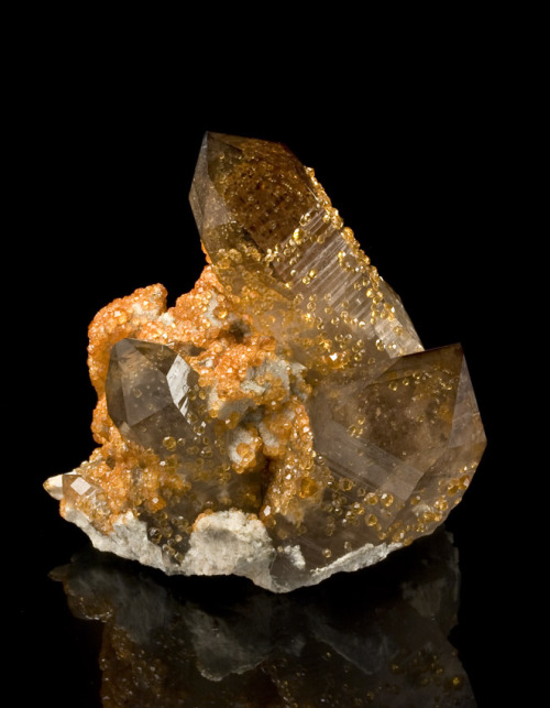 Spessartine on Quartz  Tongbei, Fujian Province, China [This] specimen features several very sharp, lustrous smoky quartz crystals. Each of the quartz crystals contain phantoms that are similarly coated by spessartine.